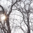 Winter afternoon sun shines through the trees. HD H.264 — Stock Video