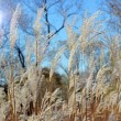 Grass and sky — Stock Photo #13670096