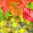 Background of autumn leaves — Stockfoto
