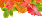 Autumn leaves frame over white for your text — Stockfoto