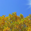 Beautiful autumn time, yellow and red leaves on trees. — Stock Photo