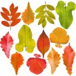 Stock Photo: Collection of tree leaves isolated on white background
