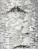 Bliska tekstury powierzchni kory brzozy — Zdjęcie stockowe
