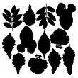 Set of silhouettes of leaves. Isolated on white. - Stock Photo