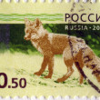 RUSSIAN-CIRCA 2008: A stamp printed in the Russian Federation, s — Stock Photo