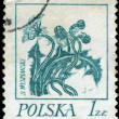 POLAND - CIRCA 1968: A stamp is printed in Poland, flower, let o - Stockfoto