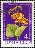 USSR - CIRCA 1972: A stamp printed in USSR show Groundsel, serie — Stock Photo