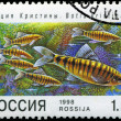 Stock Photo: RUSSI- CIRC1998: post stamp printed in Russishows fish.