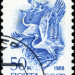 USSR - CIRCA 1988: A stamp printed in USSR (Russia) shows White  — Stock Photo