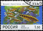 RUSSIA - CIRCA 1998: A post stamp printed in Russia shows fish. — Stock Photo