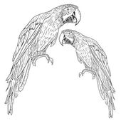 Macaws. Vector illustration. — Stock Vector