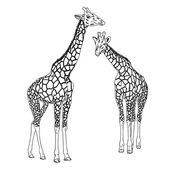 Two giraffes. Vector illustration. — Stock Vector