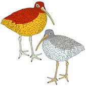 Wulp, vogel. vectorillustratie. — Stockvector