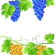 EPS 10 Three cluster of grapes — Vettoriale Stock