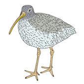 Curlew eurasian, uccello. illustrazione vettoriale. — Vettoriale Stock