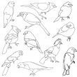 Vector set of different species of birds. — Stock Vector