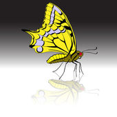 Beautiful tropical butterfly. Vector illustration. — Stock Vector