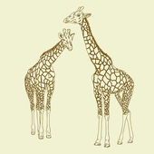Two giraffes. Vector illustration. — Stock Vector