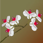 Twig blossoming orchids on a background — Stock Vector