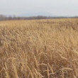 Stock Video: Dry grass on the meadow. Autumn time. HD
