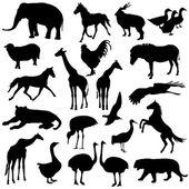 Siyah siluetler hayvanat bahçesi hayvanları toplama beyaz adam ayarla — Stok Vektör