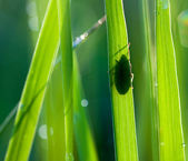 Bug on the grass — Stock Photo