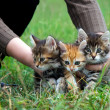 Kittens — Stock Photo #17413257