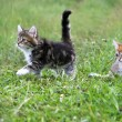 Kittens — Stock Photo #17415027