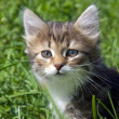 Royalty-Free Stock Photo: Kitten