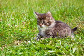 Kitten on a grass — Stock Photo