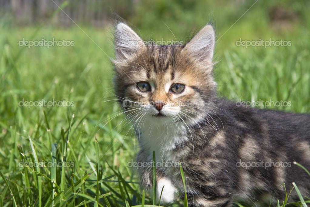 壁纸 动物 猫 猫咪 小猫 桌面 1023_682