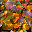 Multi-colored leaves — Stock Photo