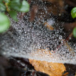 Web in dew - Stock Photo
