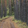 Stock Photo: Coniferous wood