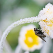 The fly sits on a flower — Stock Photo