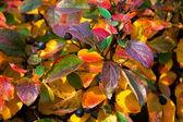 Multi-colored leaves — Stock Photo
