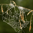 Stock fotografie: Web in dew