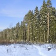 Winter wood — Stockfoto