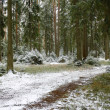 Foto Stock: Winter wood