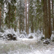 Winter wood — Foto Stock