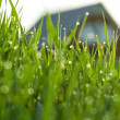 grass in dauw — Stockfoto