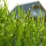 Трава в росе — Стоковое фото
