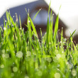 grass in dauw — Stockfoto #17460009