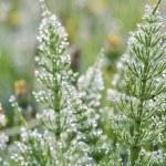 gräs i dagg — Stockfoto