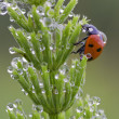Ladybird — Stock Photo #17460429