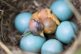 Baby birds in slot — Stock Photo