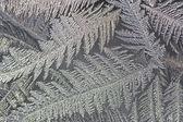 Frosty pattern — Stock Photo