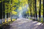 Autumn park in sun rays — Stock Photo
