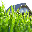 Green grass with dew drops — Stock Photo