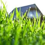 grönt gräs med dagg droppar — Stockfoto